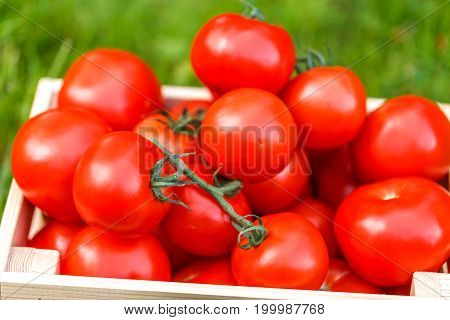 Photo of fresh tomato in wooden box on grass