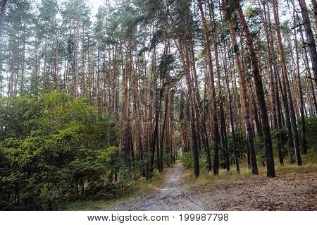 Autumn Forest. Autumn Trees. Ecology Forest. Evergreen Forest Woods