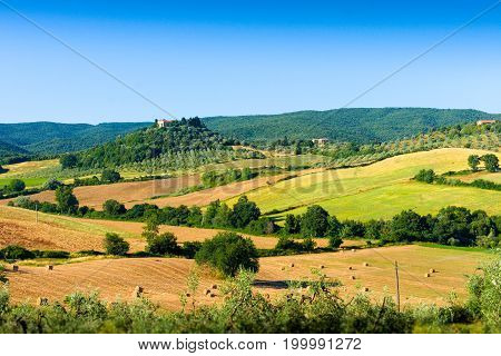 Haycock and trees in sunny tuscan countryside near Massa Marittima Italy