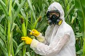 GMO scientist in coveralls and gas mask genetically modifying corn with syringe at maize field poster