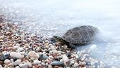 Small turtle crawling in sea waves on the beach poster