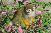 Monkey sitting on a bush with flowers. poster
