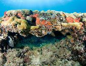 Coral legde picture taken in south east Florida. poster