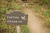 Poison Ivy (Toxicodendron radicans) sign along trail poster