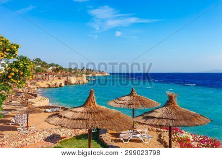 Sunny Resort Beach With Palm Tree At The Coast Shore Of Red Sea In Sharm El Sheikh, Sinai, Egypt, As