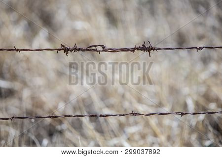 Twisted Barbed Wire On A Farm Fence