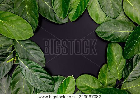 Green Leaf Ornament With Place In Center On Black Background. Summer Leaf Frame Top View Photo. Eleg