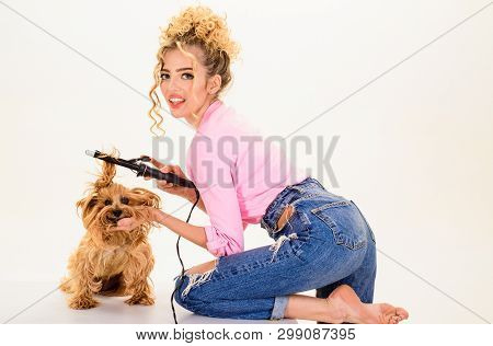 poster of Pet salon. Petshop. Dog salon. Beauty salon for animals. Grooming. Grooming master making dog hairstyle. Pet grooming. Animal clinic. Vet.