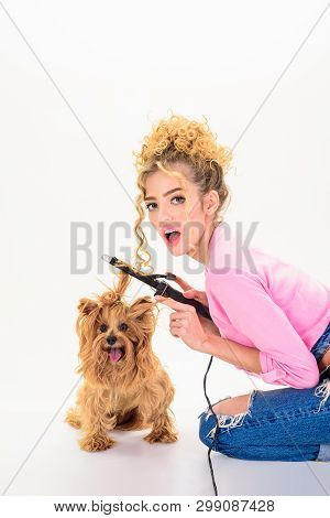 poster of Dog grooming. Pet salon. Petshop. Dog salon. Beauty salon for animals. Grooming master making dog hairstyle. Pet grooming. Animal clinic. Vet.