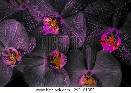 The Floral Background  - From Pink Orchid