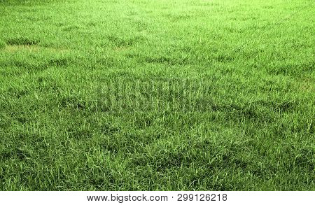 Green Grass Field 3d Rendering With Copy Space