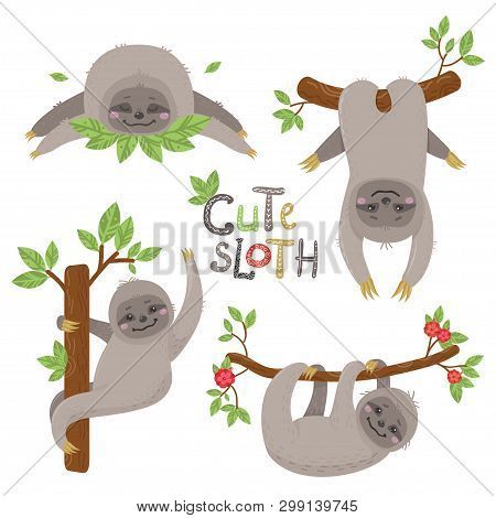 Set Of Cute Sloths Character In Various Positions