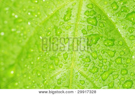 macro of water droplets on a green leaf; shallow (DOF); Series C1 poster