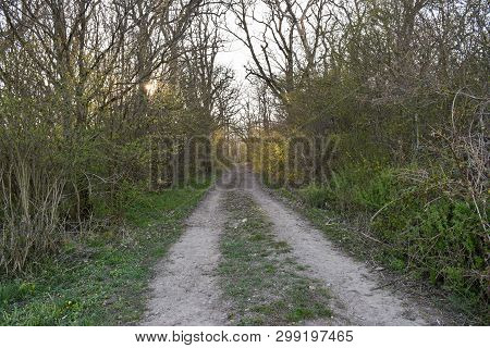Country Road By Early Springtime In A Swedish Nature Reserve