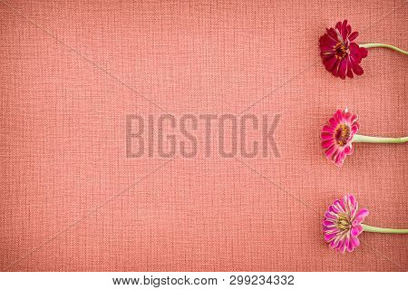 Beautiful Blooming Zinnias On Coral Colored Canvas Background With Copy Space.