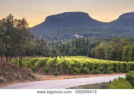 Vineyard At Sunset In Cevennes National Park, Southern France