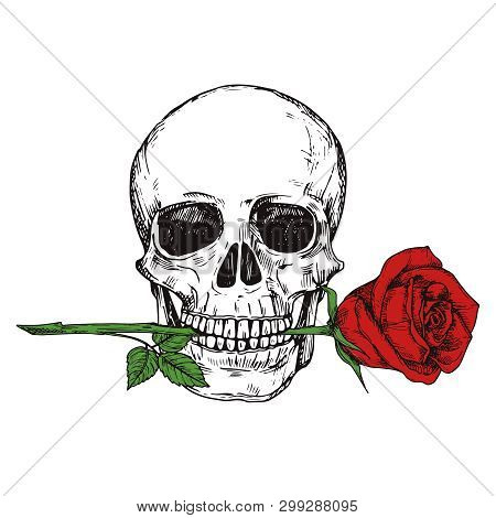 Hand Drawn Happy Human Skull With Red Rose - Sketched Skull Printable Vector Illustration. Skull Hum