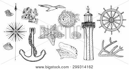 Naval Set Nautical Symbols. Gulls, Helm, Steering Wheel, Anchor, Light House, Coral, Shell, Wind Ros