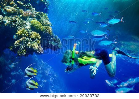 Group of coral fish in  blue water.Scuba diver.