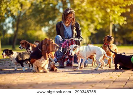 Happy group of dogs with woman dog walker enjoying in walk outdoors.