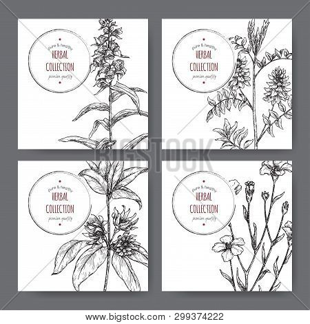Four Labels With Star Anise Or Badiane, Liquorice, Digitalis And Common Flax Sketch.