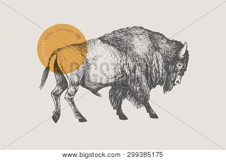 Hand Drawing Of American Bison On A Light Background. Buffalo In Vintage Engraving Style. Vector Ret