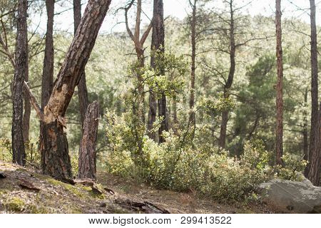 Forest Spring Landscape - Forest Trees With Grass On The Foreground And Sunlight Shining Through The