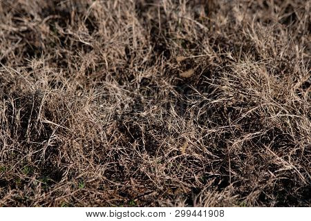 Background Image Of Dormant, Dry, Dead Grass