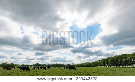 Background Image Of A Heart-shaped Hole In The Clouds Above A Pasture With Beef Cattle Grazing In Ea