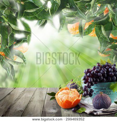 Fruits On Wooden Table In Green Sunlight Mandarin Garden. Natural Morning Background