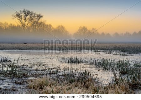 Cold Swamp