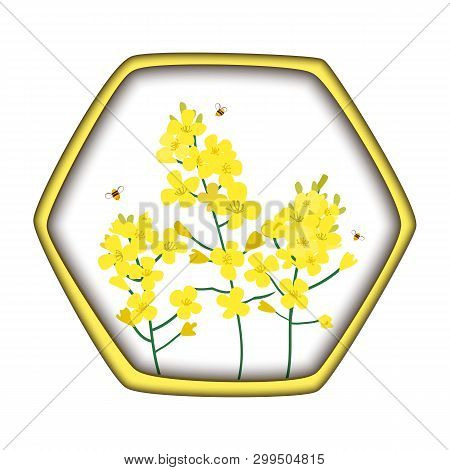 Rape Honey Concept. Brassica Napus, Rapeseed, Colza, Oil Seed, Canola And Bees. Vector Illustration
