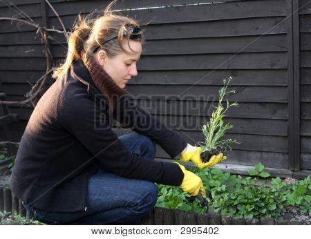 Spring Cleaning In Garden