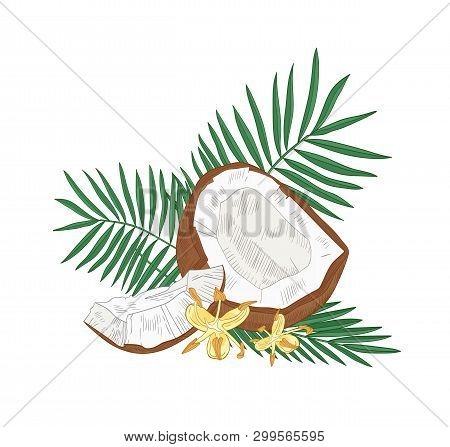 Detailed Botanical Drawing Of Cracked Coconut, Palm Tree Leaves And Flowers Isolated On White Backgr