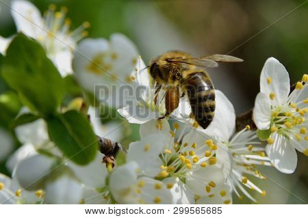 Spring; Flowers With Bees And Pollinaters Everyhere