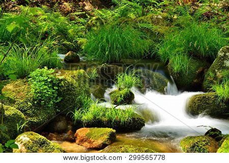 Spring;  Stream, Water In Movement At Mountain Brook