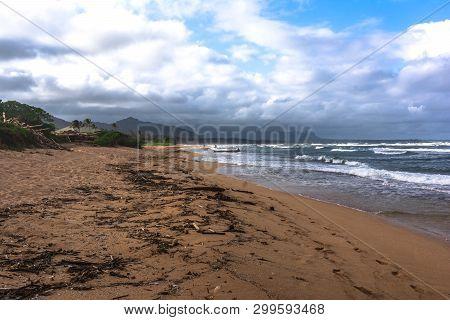 Dead Trees Along Waipouli Beach, Kauai, Hawaii