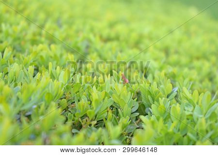 Stock Photo Green Leaves Foliage Texture Background