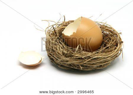 broken egg in nest isolated on white background poster