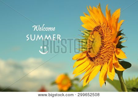 Inspirational Quote- Welcome Summer Greetings. With Smiling Sunflower Blossom Welcoming New Season.