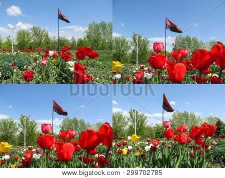 A set of four photos of the flag of the Right Sector among the park with a flower bed. Red and black flag on flagpole fluttering in the wind against the background of spring nature in Sumy, Ukraine poster