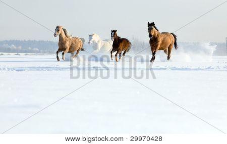 Herd of horses in winter