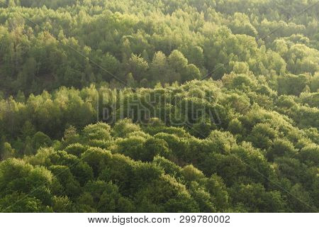 Natural background. Beech forest on the hillside. Lush green leaves in spring. The texture of the crown of deciduous trees