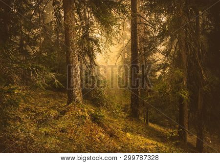 Pine Forest Nature. Ancient Pine Forest. Nature. Pine Forest. Natural Environment. Forest Nature. Re