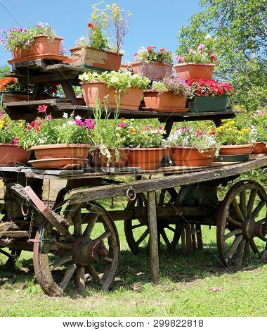Very Old Wooden Cart With Pots Of Flowers In The Meadow