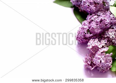 Lilac Flowers On White Background. Copy Space
