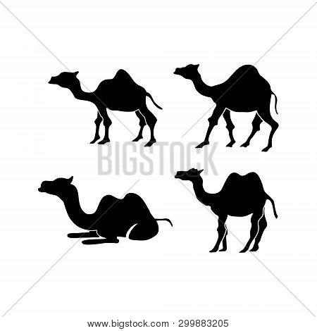 Camel Illustration Animal Vector Design Graphic Illustration