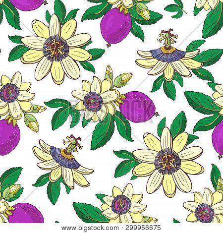 Passionflower Passiflora, Passion Purple Fruit On A White Background Floral Seamless
