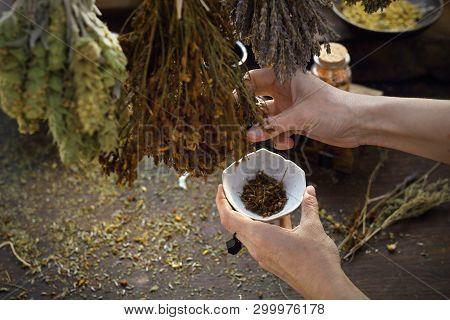 Herbalist. The Woman Prepares Medicinal Herbal Mixtures.