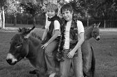 This is a photo taken at Christmas time in Florida. The boys are sitting on their pet miniature donkey smiling with scarfs around their necks. poster